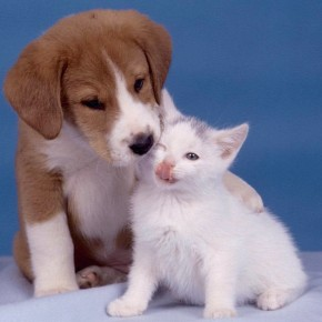 i-2361-290x290 Бизнес идеи: создаем онлайн ветеринарную клинику