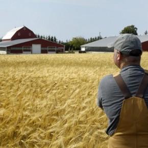 caed3d-290x290 Как открыть фермерское хозяйство?